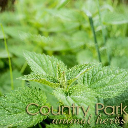 Nettle Leaf 1kg at Bowral Coop