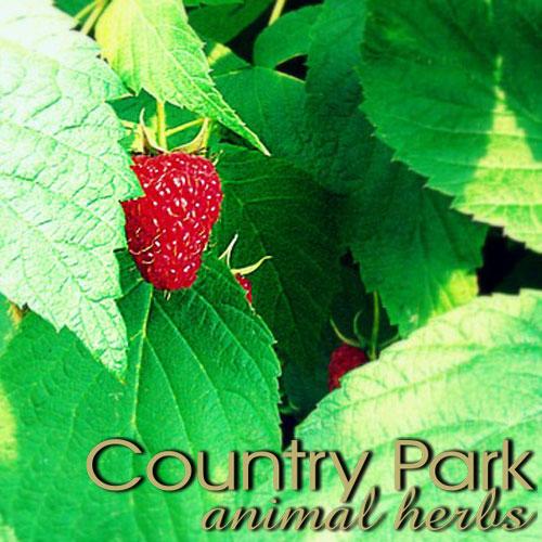 Raspberry Leaves 1kg at Bowral Coop