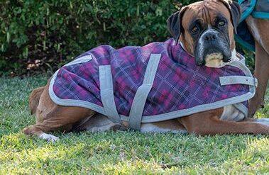 """Eurohunter Everyday Thredbo Dog Rug 24"""" at Bowral Coop"""